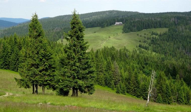 Domki Czorsztyn