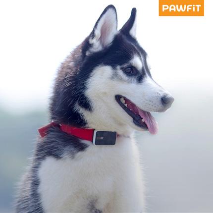 Un chien portant un collier pawfit-S