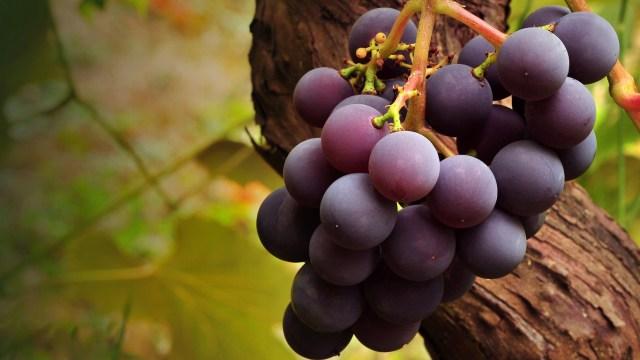 DOMUS 24® Apoio Domiciliário - Alimentos Antioxidantes -  Uva