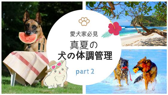 真夏の犬の体調管理