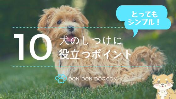 犬のしつけ10