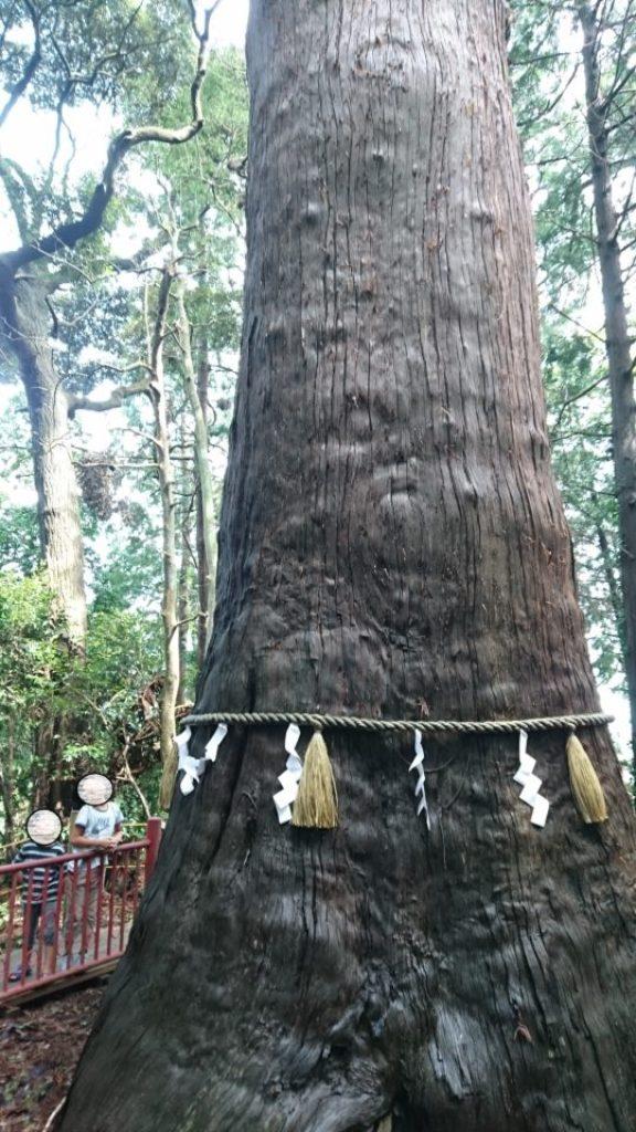 麻賀多神社のご神木。幹回りは約9mもある