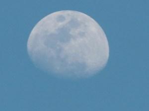 昼間に見える月