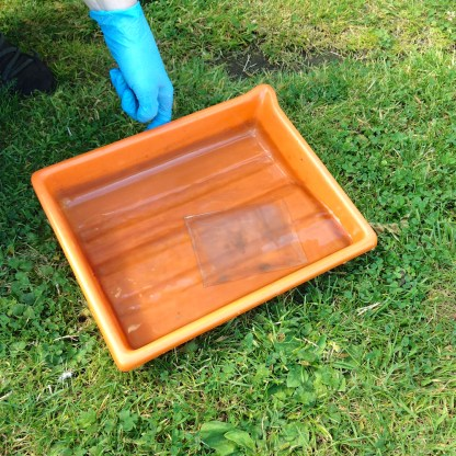 fixing the first ambrotype plate