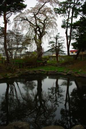 水面に映る寿公園の江戸彼岸