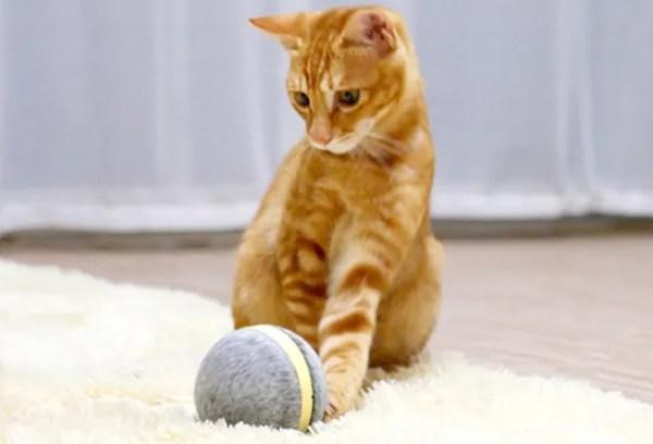 Wicked Ball: Kediler ve köpekler için yeni bir eğlence ve egzersiz aracı