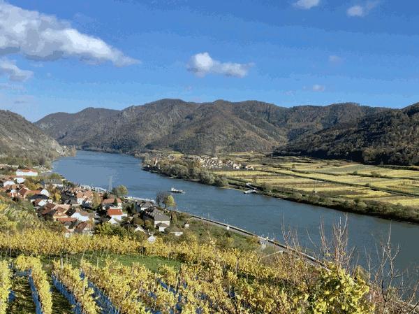 1955 wurde die Wachau zum Landschaftschutzgebiet erklärt. In den siebziger und achtziger Jahren wurde der Bau eines Donaukraftwerkes bei Rührsdorf erfolgreich abgewehrt. Somit konnte die Donau im Bereich der Wachau als fliessendes Gewässer erhalten bleiben. Die Wachau bewarb sich daraufhin erfolgreich um das Europäische Naturschutzdiplom des Europarats und die Auszeichnung als UNESCO-Welterbe. Die Zukunft der Wachau, die Erhaltung und Verbesserung dieser einzigartigen Landschaft ist damit zur Sache der gesamten Menschheit geworden. Die besondere geologische, klimatische und landschaftliche Vielfalt macht die Bedeutung der Wachau aus. Ein schützenswerter Naturraum von Flusslandschaft, Hangwiesen, Trockenrasen, Weinterassen, Obstgärten und Wäldern. Die Marillenblüte Mitte April gilt als Höhepunkt des Frühlings, als besonderes Naturerlebnis, in der Wachau.