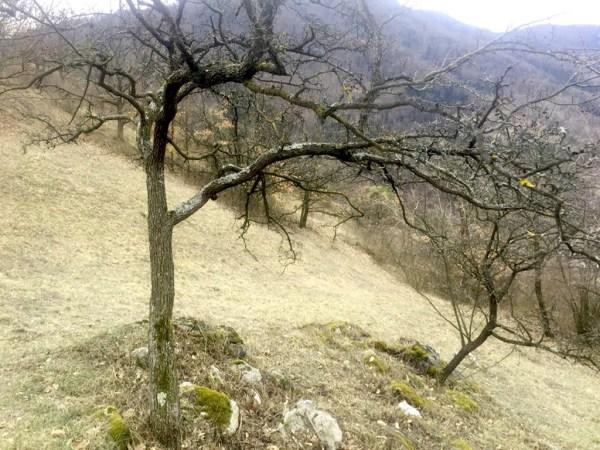 Trockenrasen am Setzberg im Spitzer Graben in der Wachau in Österreich mit Pulsatilla vulgaris im Februar 2109
