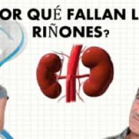 ¿Por qué fallan los riñones?