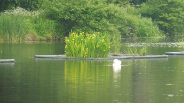 floting island