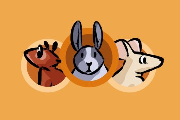 Draw Bunnies and other Rodents on Udemy! by Don Corgi