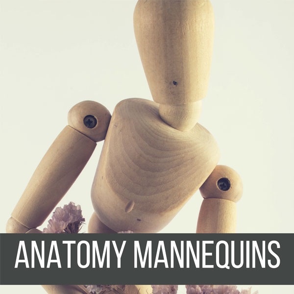 Recommended Anatomy Mannequins (or Manikins) for any level of Artist! by Don Corgi