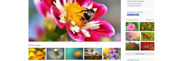 Pixabay is a good website for downloading CC0 images, totally free!
