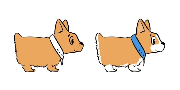 Finally let's give our corgi drawing some color!