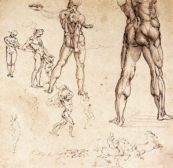 anatomical gesture drawing studies by leonardo davinci
