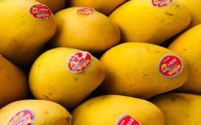 Hey Mango. Mango Mexicano.