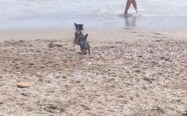 playa castillo sohail (1)