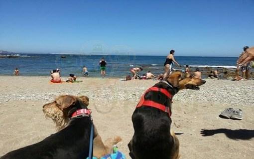 Playas para perros en Asturias
