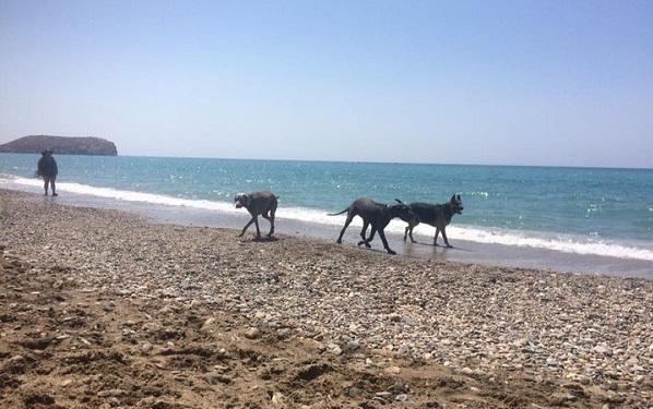 Playa del Gachero,Murcia