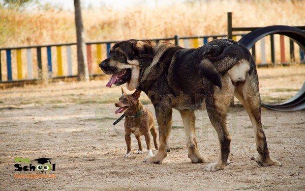 dogschool (1)