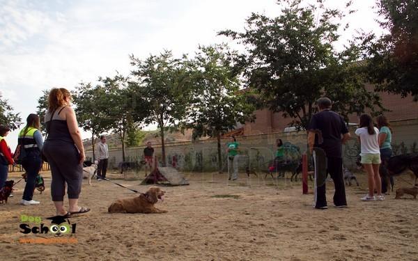 dogschool (2)