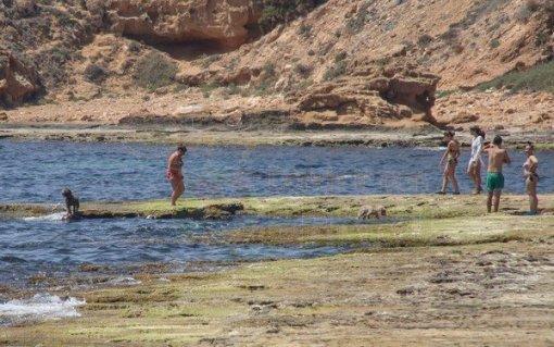 Playas para perros en al Comunidad Valenciana