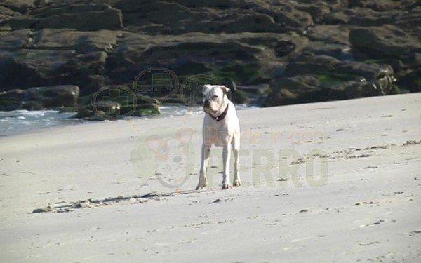 playa de a foz y a calzoa (5)