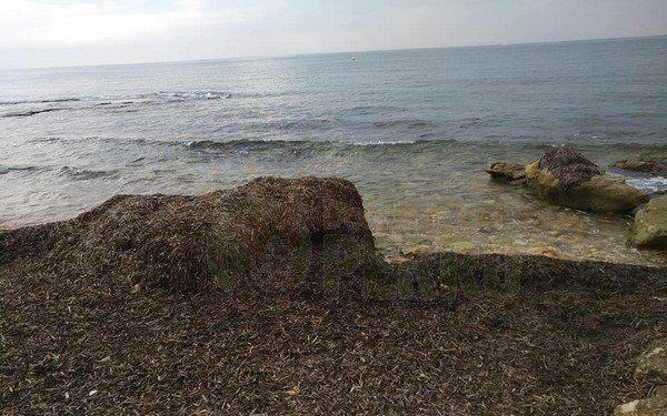 punta margalla (10)
