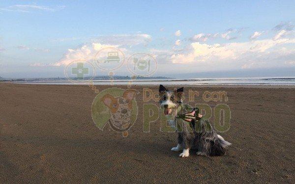 playa de Trengandín (2)