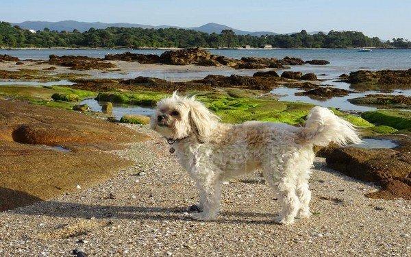 Playa de Bornalle. Muros