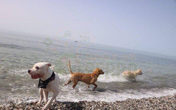 playa de torrox (9)