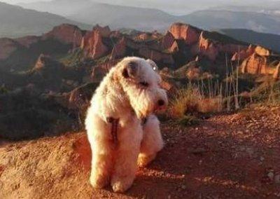 Las Médulas con perro