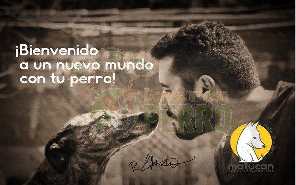 Matucan servicios caninos (2)