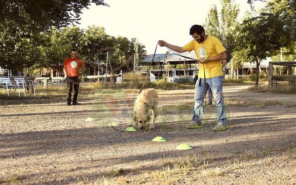 Matucan servicios caninos (3)
