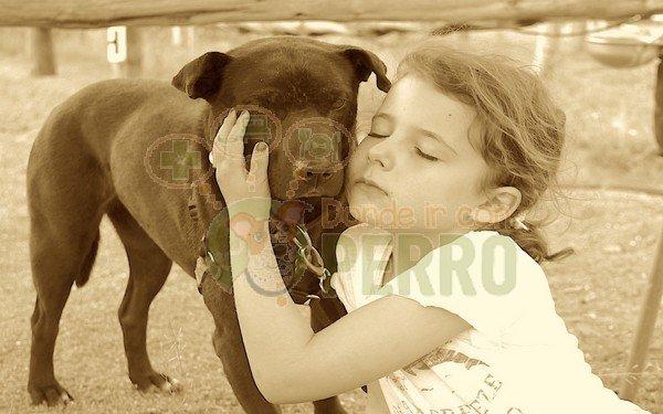 Matucan servicios caninos (6)