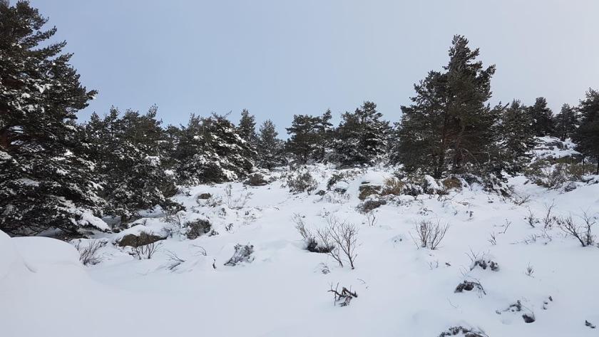 20160117_124433 (Copy) nieve