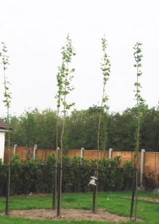 peter-donegan-landscaping-ltd-trees-crown-raising