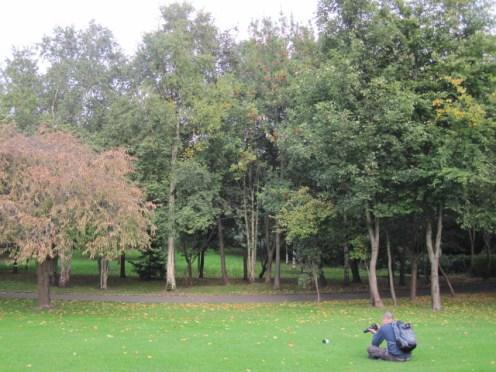trees dublin (1)