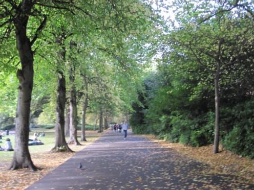 trees dublin (3)