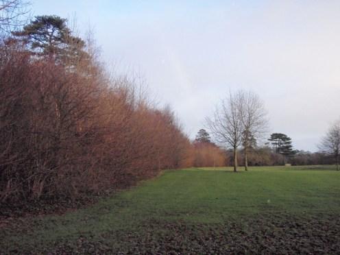 peter-donegan-landscaping-ltd-file-099