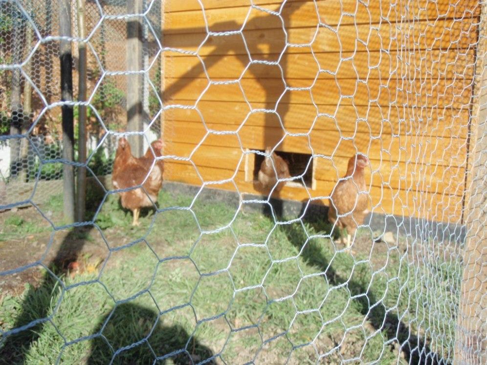 the hens peter donegan