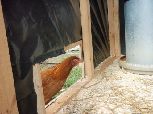 hens home