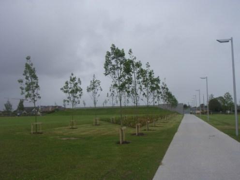 fr-collins-park-tree planting