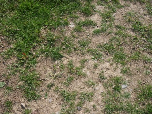 grass seed problems