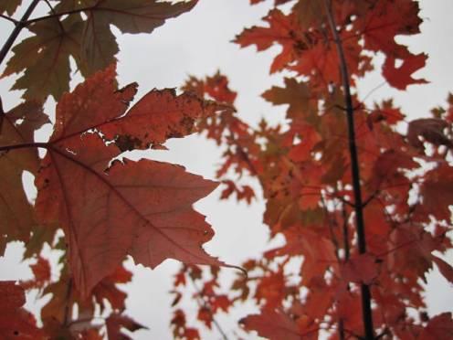 autumn-colour-28