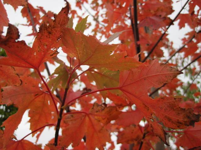 autumn-colour-29