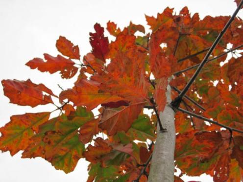 autumn-colour-4