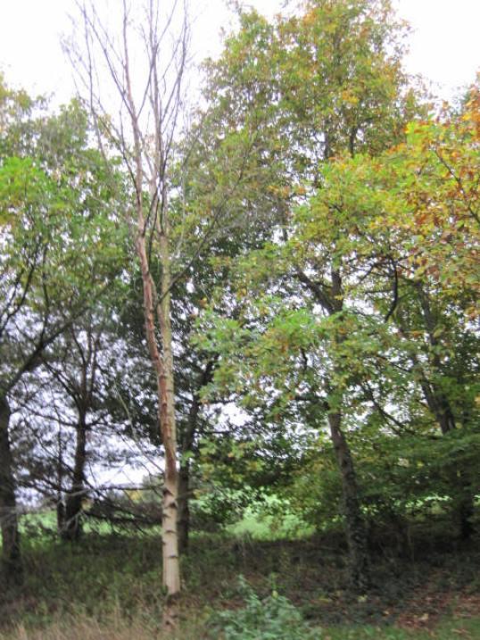 kilkenny-castle-gardens-44