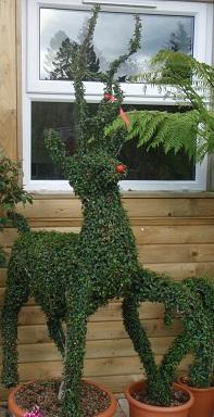reindeer-plants