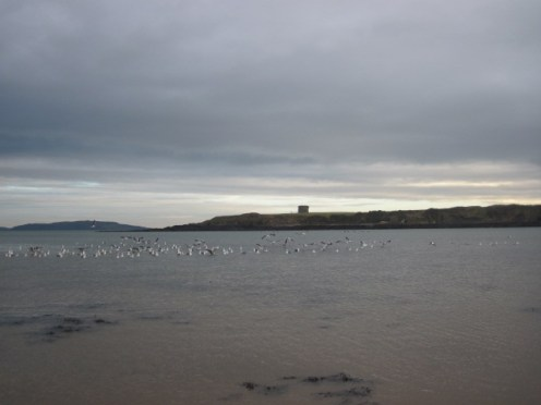 loughshinny beach (14)
